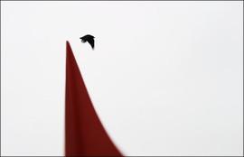 Eagle_crow_6x9scored