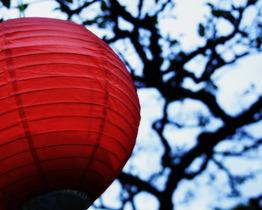 Lanterntree_3079